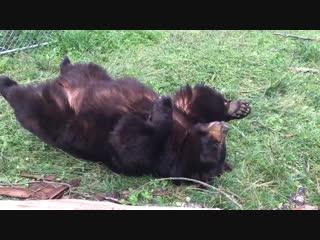 Мне кажется этот медведь должен был родиться котом