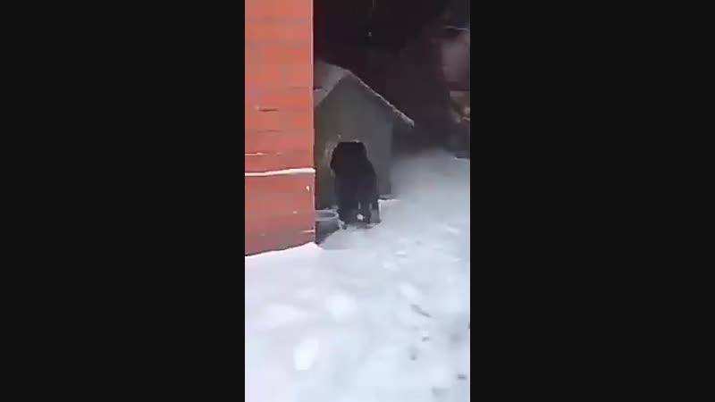 Уроки неравнодушия и милосердия для людей Собака нашла замерзающую бездомную кошку и