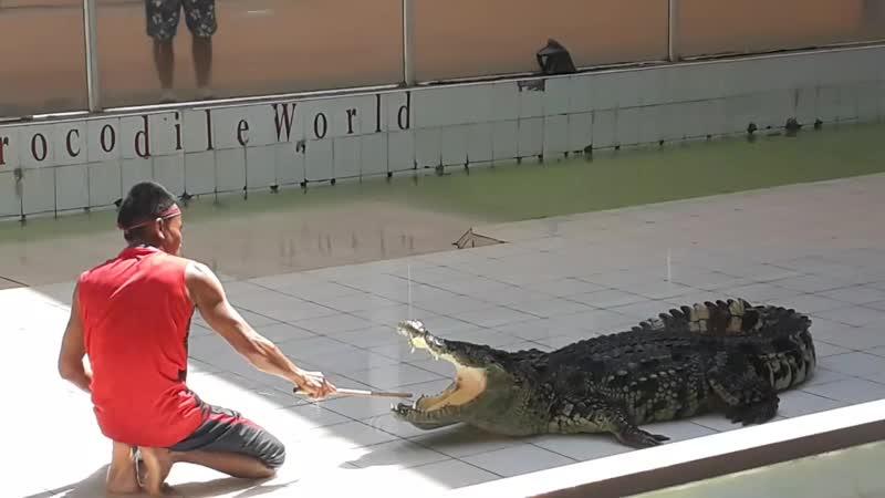 укращение крокодила