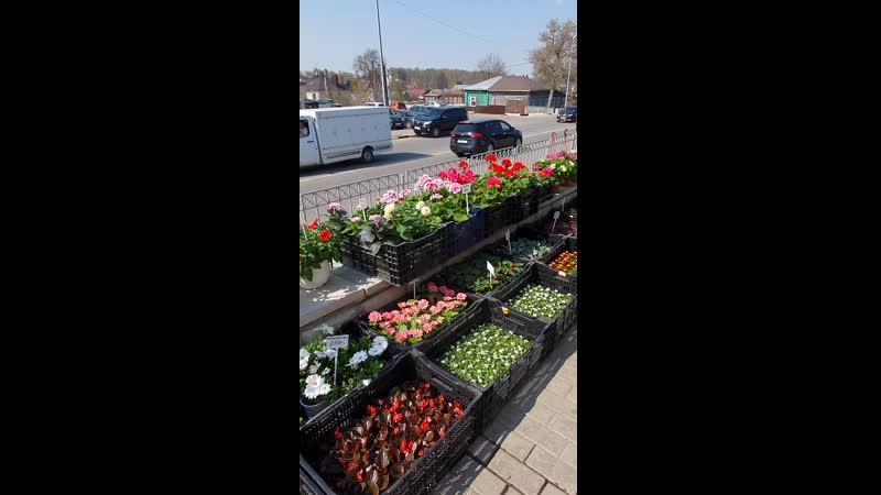Огромный выбор растений в Цветочной поляне