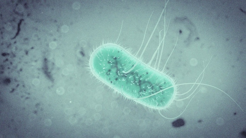 E.Coli Bacteria Animation Tutorial with Cinema 4D / Octane / After Effects