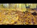 Осень в Берёзовке