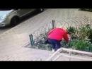 Воровка растений