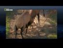 Бойцовский клуб для животных 2 Дикие разборки в Америке 2013 HD