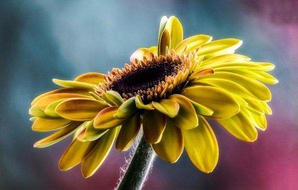 Лучшим днем твоей жизни станет тот день, когда ты поймешь, что твоя жизнь принадлежит только тебе