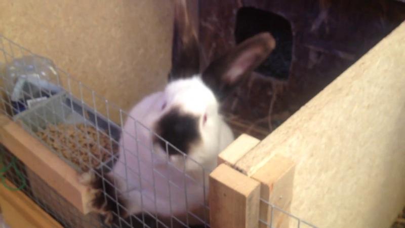 Когда ставить маточник Усатая крольчиха