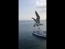 Гурзуфские чайки