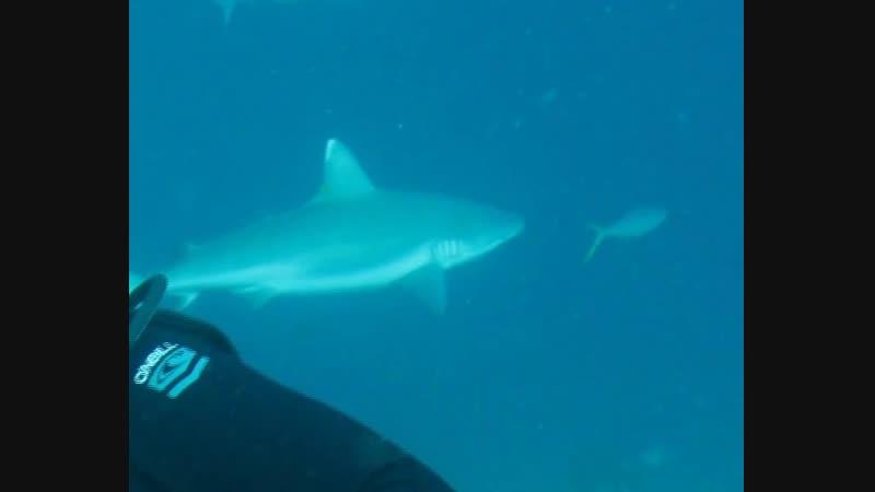 Мальдивы 2008 (scuba diving underwater dive дайвинг shark travel trip lifestyle)