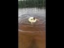 Учимся купаться
