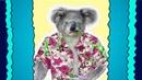 Koala Alter Ego Super Sila Competition Animation