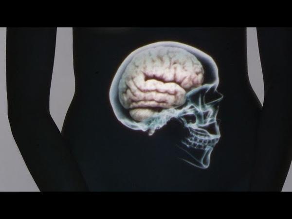 Der kluge Bauch - Unser zweites Gehirn | Doku |ARTE
