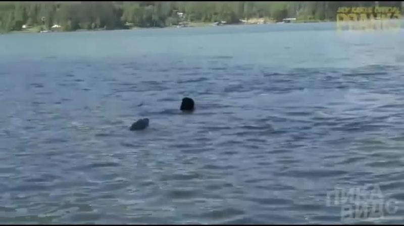 Юмор - смешные короткие видео - Humor - lustige Videos - Krokodil
