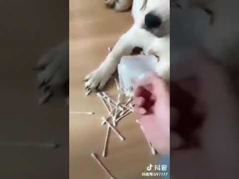 Собака мама защищает своего сына