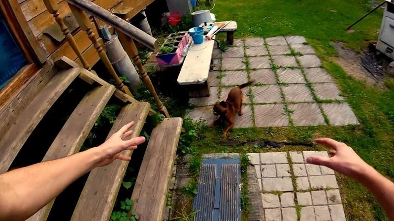 2019-06-19 Когда собакен хочет бегать