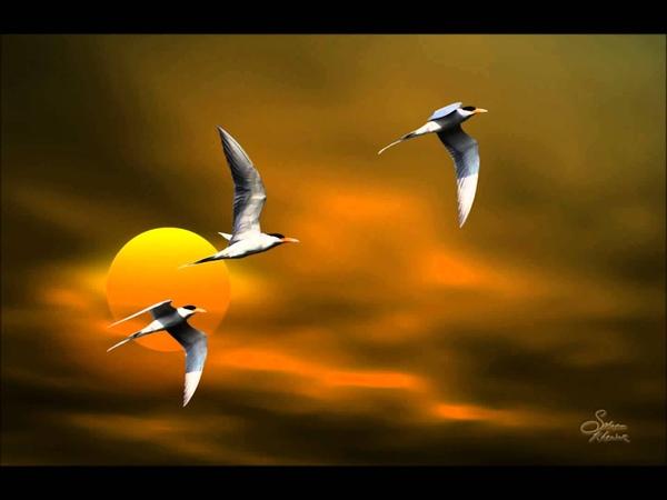 On My Wings Nightingale