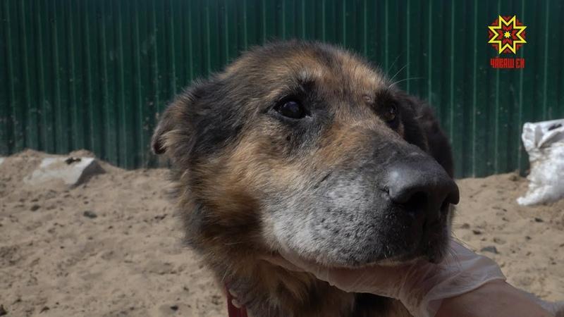 Пункт передержки бездомных животных в Чебоксарах нуждается в помощи