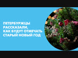 Петербуржцы рассказали, как будут отмечать старый Новый год
