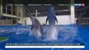 Новости на Россия 24 • После гибели очередного дельфина директор Приморского океанариума ушел с поста