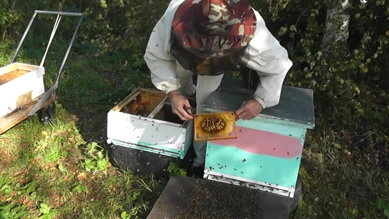Секс с пчеловодом видео это