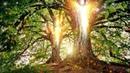 Baumengel auch Bäume haben ein Bewusstsein