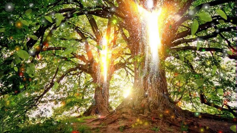 Baumengel - auch Bäume haben ein Bewusstsein.
