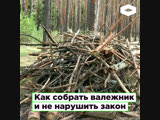 Как правильно собирать валежник в России | ROMB