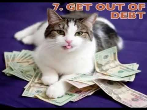 10 things what your Cats should do For The Life