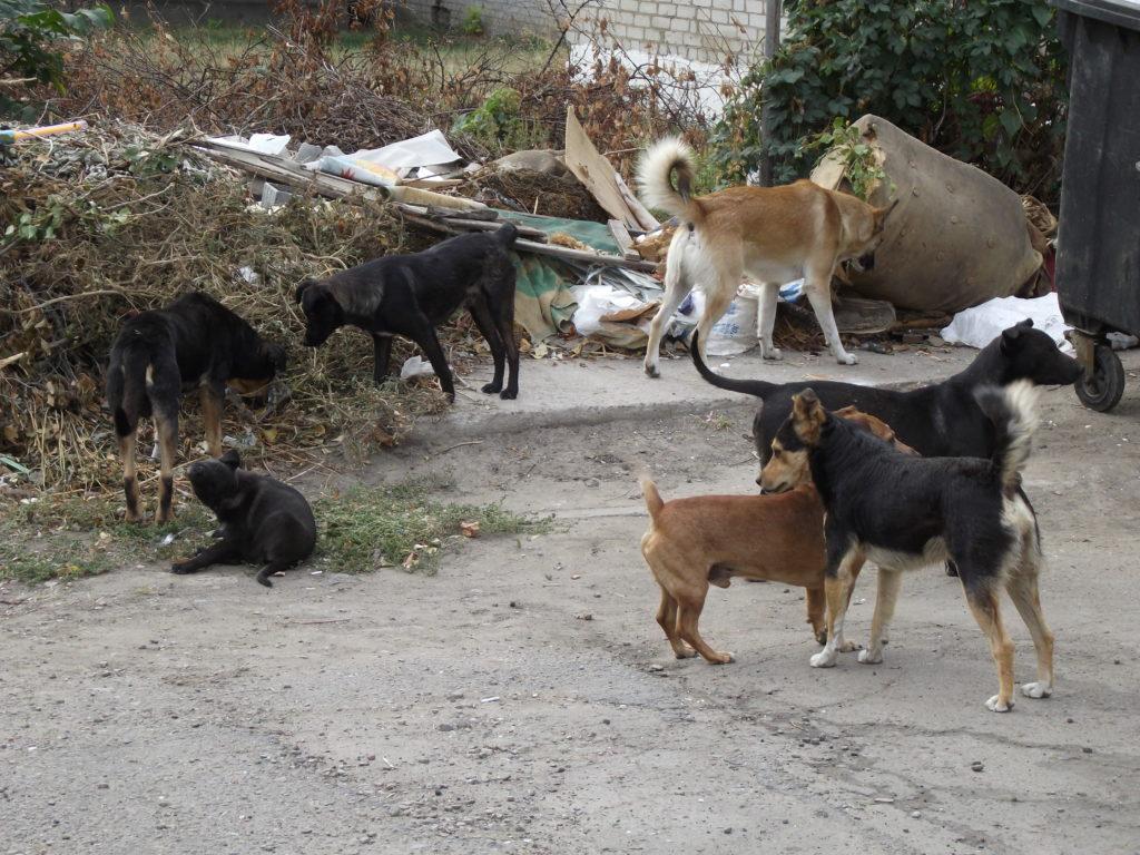 В бюджете Славянска на 2019 год предусмотрено 100 тысяч гривен на стерилизацию бездомных собак.
