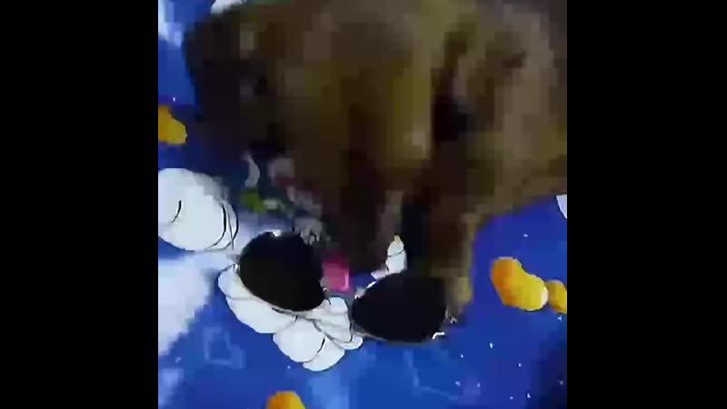 Бэльку одевается на прогулку)