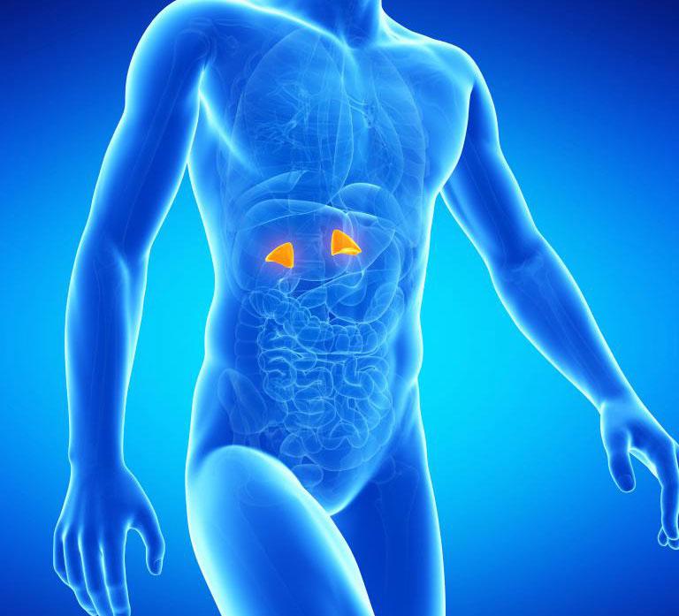 Две надпочечники организма - часть эндокринной системы - могут быть повреждены ростом раковой опухоли.