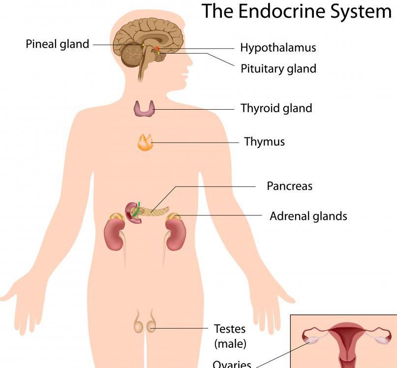 Рак, который влияет на эндокринную систему, называется эндокринным раком.