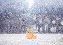 снегопад и кот   зима   мимими   kawaii nya   cat winter