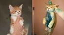 Смешные кошки и коты Смешные коты до слез – МатроскинТВ Ожидание и реальность 2019
