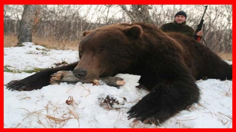 Бой с медведем Рассказ из первых уст бывалого ОХОТНИКА