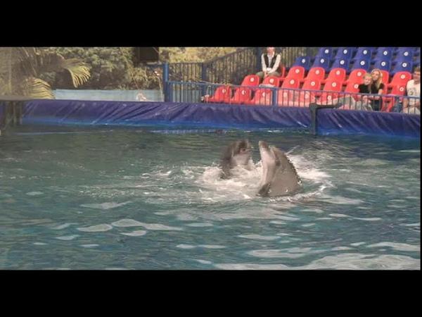 Дельфинарий. Полное представление. Котики, дельфины, белый кит. Новинка