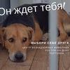 Центр безнадзор. животных, Ростов. Волонтёры.