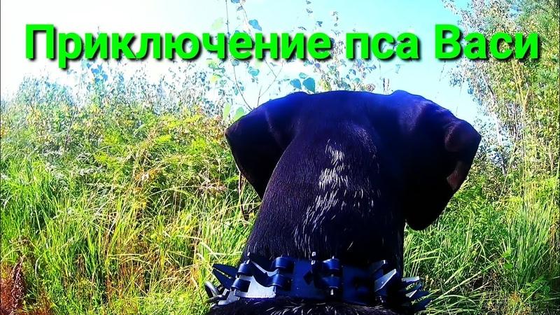 Приключение пса Васи. Лес г.Рошаль