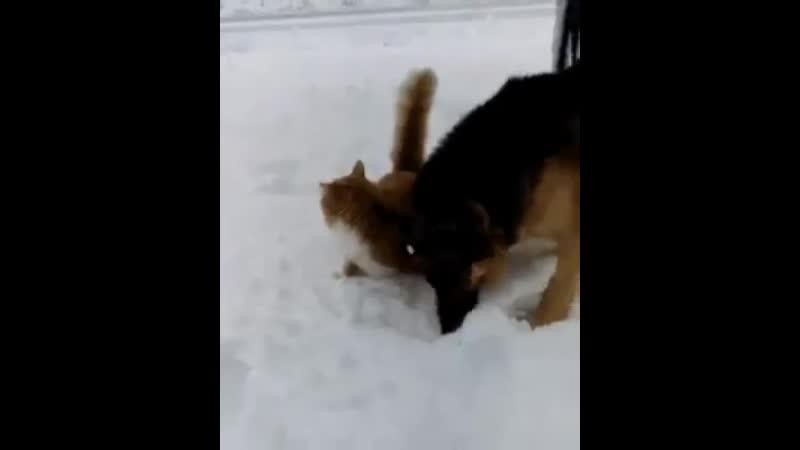 Отыгралась собака на кошке: Вот тебе за съеденную лишнюю сосиску ^_^