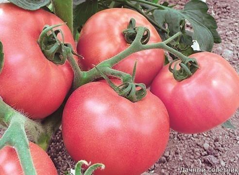 Основные секреты выращивания вкусных помидор: Ну, во-первых, надо определить что значит вкусный помидор Это мясистый, с тонкой шкуркой, сладкий, нежной мякотью, без неприятной кислинки, с