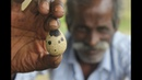 Quail egg with old rice my daddy in my village / VILLAGE FOOD FACTORY