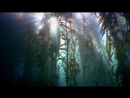 Беломорские водоросли Ламинария и Фукус