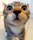 Ко мне сейчас подошел кот и грустно так: Мяу, мяу. Конечно, я его понимаю.