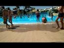 Аквапарк (волна в бассейне)