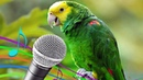 Birds Got Talent! - Funny Birds Sing, Dance, Mimic Animals - Funny Parrots Dancing Videos
