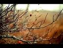 Сварожич - Слёзы Осени (M8l8th cover)