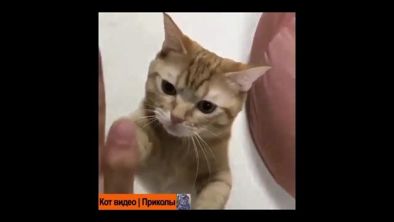 Ладушки-ладушки🐱