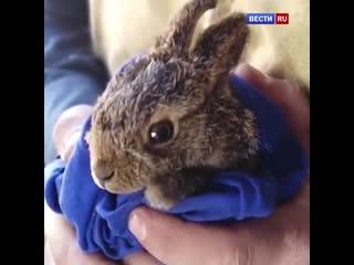 Какая добрая новость. Московские пожарные спасли из огня в Южном Бутово беззащитного зайчика!