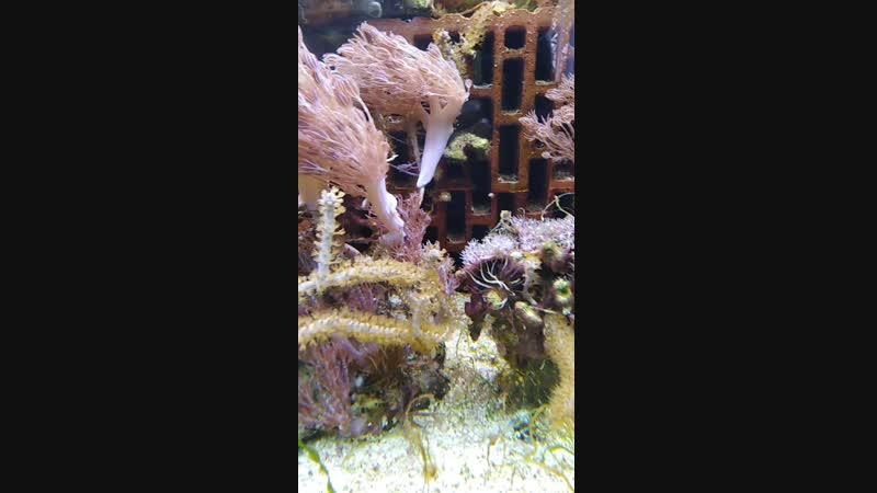 Морской аквариум без сампа без пенника без фильтра