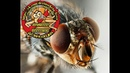 Дезинсекция от мух Лысьва Чусовой Тел: 89523338095; 89194802521