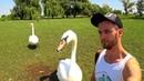 Vlog В окружении гусей и лебедей Днепр Aqua Travel